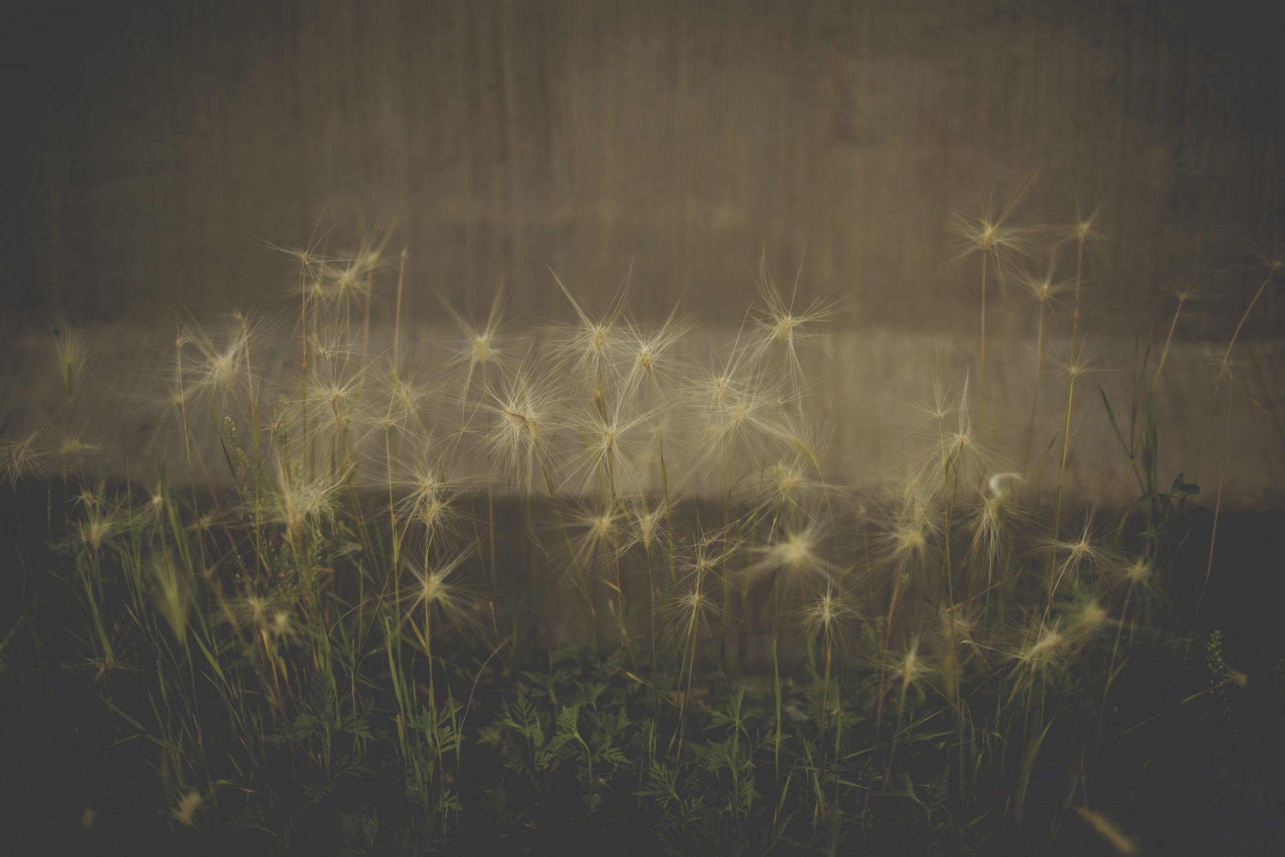 Wild Flowers by Maria Lloyd Photography